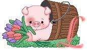 Schweine tulpen alphabete