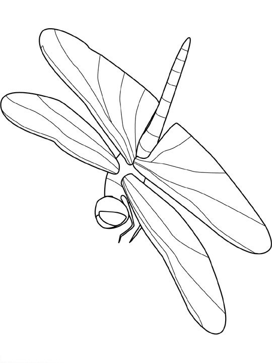 Insekten ausmalbilder