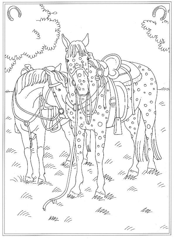 Kleurplaten Van Paarden Die Springen Malvorlage Reitschule Ausmalbilder Yv5hg