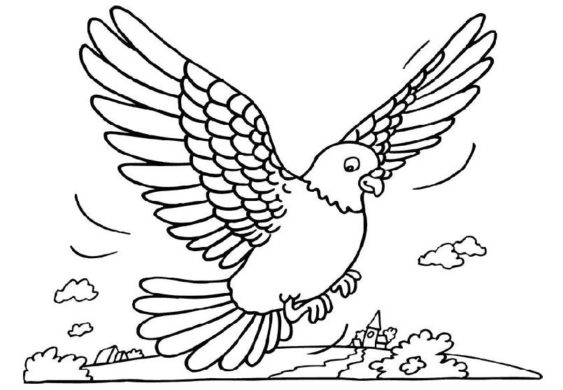 Tauben ausmalbilder