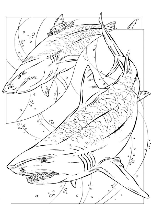 Fantastisch Hammerhai Hai Druckbare Malvorlagen Fotos ...