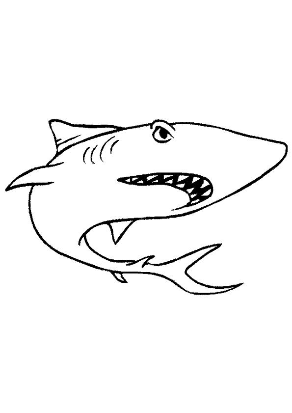 Malvorlage Haie Ausmalbilder Axzug