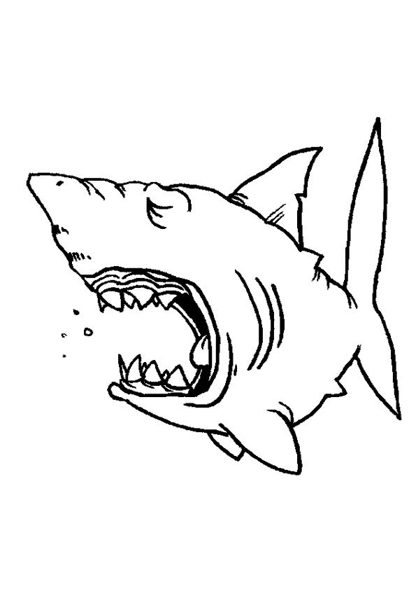 Haie ausmalbilder
