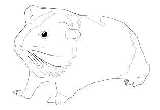 Hamster ausmalbilder