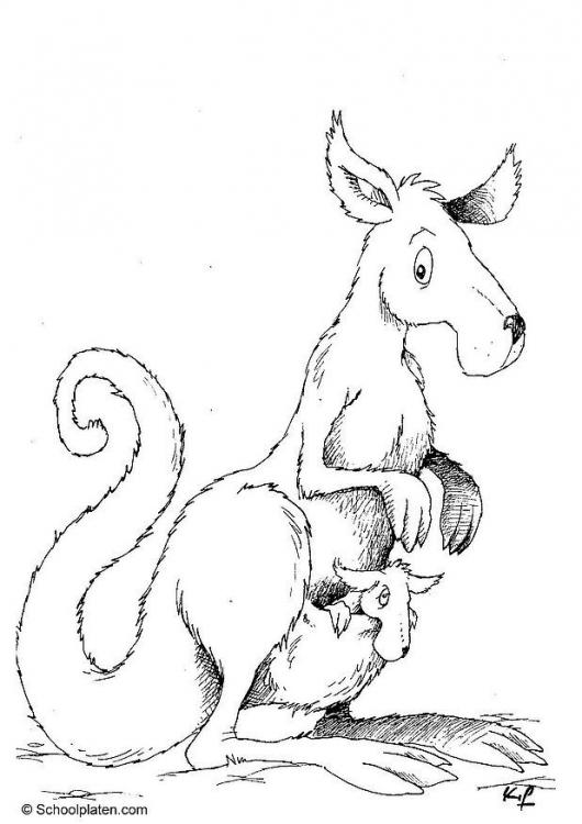 Kanguru ausmalbilder