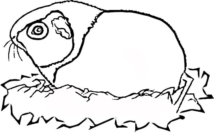 Meerschweinchen ausmalbilder
