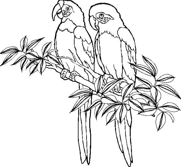 Papagei ausmalbilder