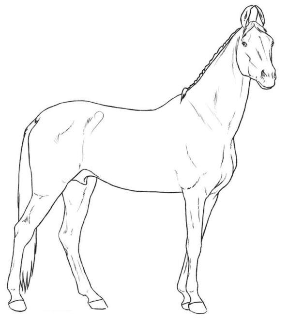 Pferderassen ausmalbilder