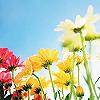 Blumen und natur avatare
