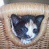 Katzen avatare