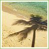 Palmen avatare