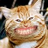 Spass und humor avatare