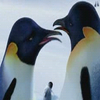Happy feet avatare