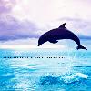 Delfine avatare