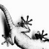 Echsen avatare