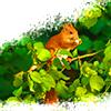 Eichhornchen avatare