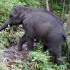 Elefanten avatare