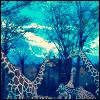 Giraffen avatare
