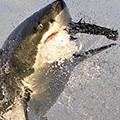 Haien