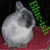 Kaninchen avatare