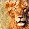 Lowen avatare
