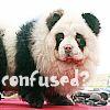 Panda avatare