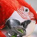 Papageien avatare