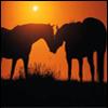 Pferde avatare