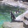 Pinguine avatare