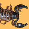 Skorpione avatare