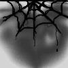 Spinnen avatare