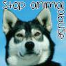 Tiere missbrauch avatare
