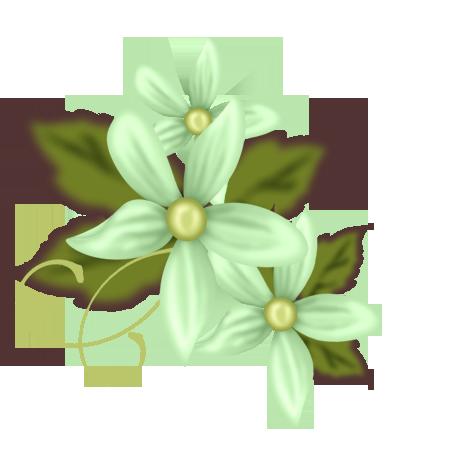 Blumen bilder
