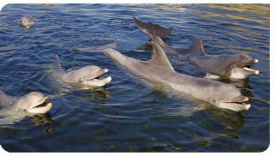 Delfine bilder
