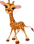 Giraffen bilder