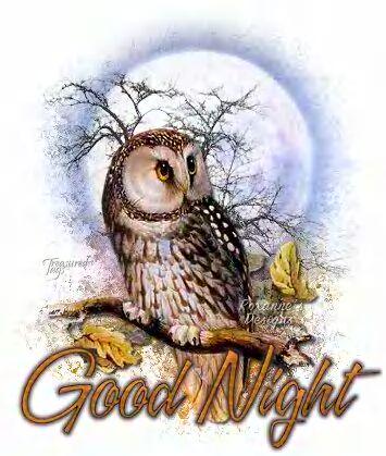 Guten nacht bilder