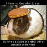 Humor bilder
