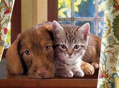 Hunde katzen bilder