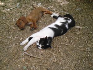 Hunde katzen