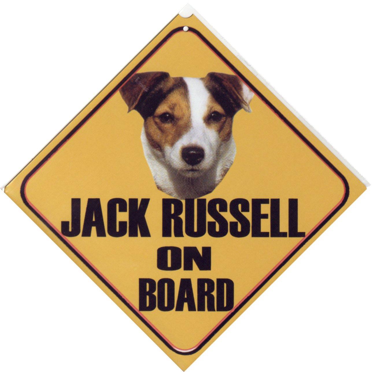 Jack russel bilder