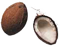 Kokosnuss bilder