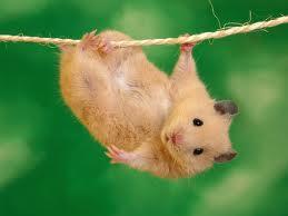 Bilder lustige hamster bilder