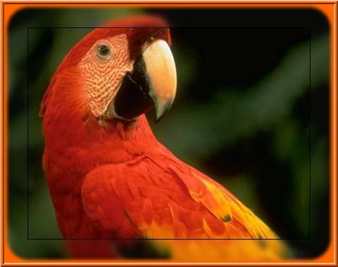 Papageien bilder