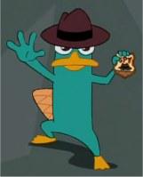 Perry das schnabeltier bilder