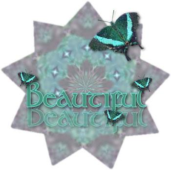 Schmetterling bilder