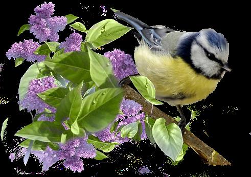 Vogel bilder