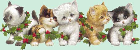Weihnachten katzen bilder