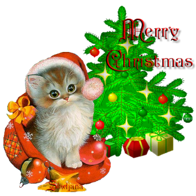 Bilder weihnachten tiere bilder