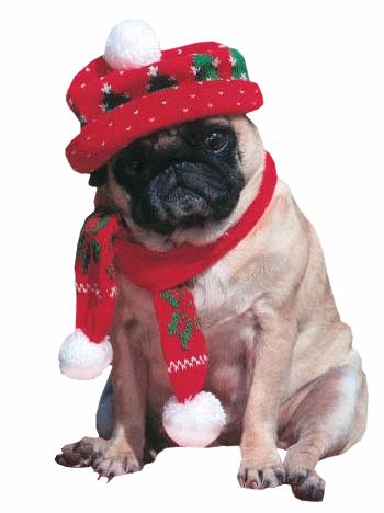 Weihnachten tiere bilder