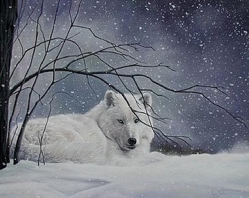 Wolfe bilder